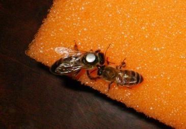 Оборудование для пчеловодов