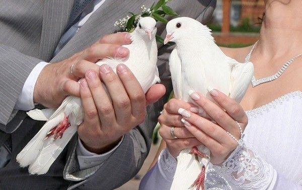 Свадебные голуби высокого полета!