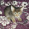 Отдам в дар добрые руки котят от домашней кошки