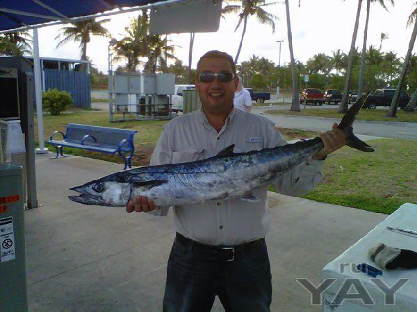 Кингфиш,марлин,рыбалка, отели, круизы майами бич, сша, америка