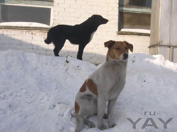 Два стерилизованных щенка ждут хозяев!!!