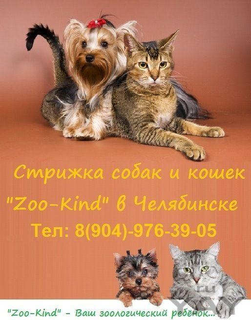 Стрижка собак и кошек «zoo-kind»
