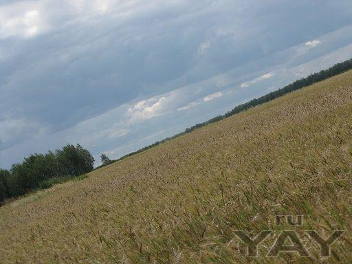 Участок земли для сельхозпроизводства 900 гектар