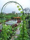 Продам плодоносящий сад