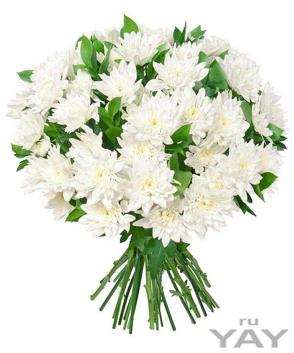 Цветы. доставка хризантем