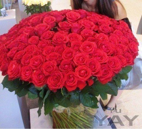 Дон жуан (101 роза, 50 см стебель)