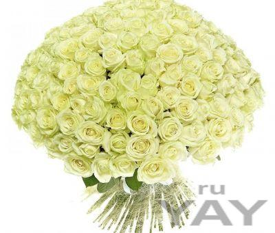 Любимый (151 роза, длина стебля 60см )