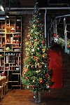 Ёлки доничева, продажа новогодних елок