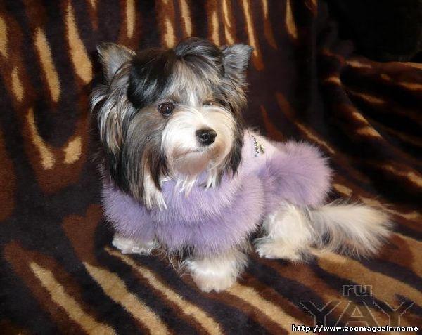 Одежда для собак пошив