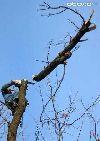 Кронирование и удаление деревьев Омск