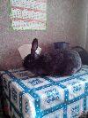Продаю самок кроликов породы фландр. Нижний Новгород