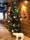 Ёлки доничева, продажа новогодних елок Новосибирск